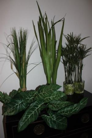 vuokrattavia kasvikoristeita